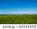 田園 風景 田んぼの写真 43242659