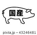 国産豚 国産 ラベルのイラスト 43246481