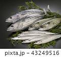 旬の魚 43249516