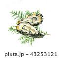 かき 牡蠣 43253121