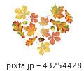 あき 秋 葉のイラスト 43254428