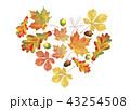 あき 秋 葉のイラスト 43254508