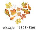 あき 秋 葉のイラスト 43254509