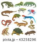Vector reptile nature lizard animal wildlife wild chameleon, snake, turtle, crocodile illustration 43258296