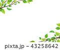 若葉 フレーム 新緑のイラスト 43258642
