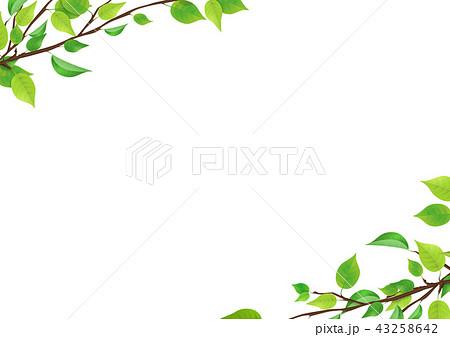 新緑 葉 (PNG、透過) 43258642