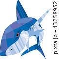 凶暴な鮫 43258952