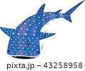 水玉模様のジンベイザメ 43258958