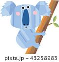 コアラ 木登り 有袋類のイラスト 43258983