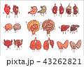 器官 人体 健康のイラスト 43262821