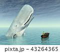 くじら クジラ 鯨のイラスト 43264365
