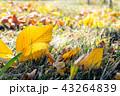 葉 草 木の葉の写真 43264839