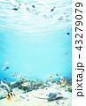 南国の海の中 イラスト 43279079