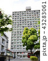 早稲田大学 43283061