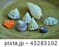 貝殻 43283102