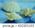 貝殻 43283103