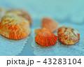 貝殻 43283104