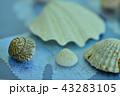 貝殻 43283105