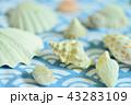 貝殻 43283109