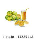 オレンジ オレンジ色 橙のイラスト 43285118