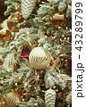 クリスマス クリスマスツリー サンタクロースの写真 43289799