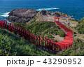 神社 稲荷神社 鳥居の写真 43290952