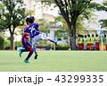 少年サッカー サッカー フットボールの写真 43299335