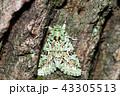 ガ ケンモンミドリキリガ 虫の写真 43305513