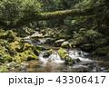 川 苔 倒木の写真 43306417