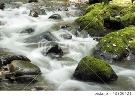 多くの石の間を流れる奥十曽渓谷の流れ 43306421