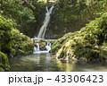 おしどりの滝 滝 苔の写真 43306423