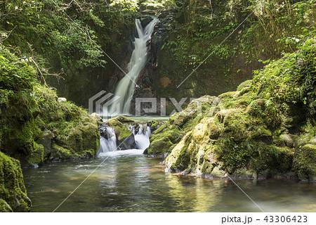 苔むした岩とおしどりの滝 43306423