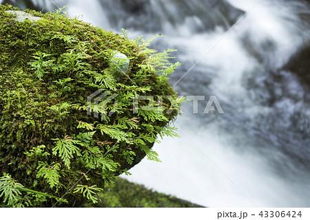 奥十曽渓谷の流れをバックにシダの生えた石 43306424