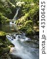 おしどりの滝 滝 川の写真 43306425