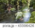 川 渓谷 清流の写真 43306426