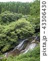 布の滝 滝 永野川の写真 43306430