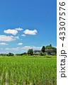 晴れ 田んぼ 田園の写真 43307576
