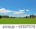 青空 夏 田んぼの写真 43307578