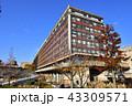 岡山県庁 秋 役所の写真 43309571