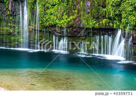 雄川の滝 43309751