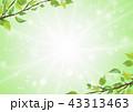新緑 葉 キラキラ パーティクル 中心から溢れる光   43313463