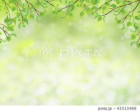 Nature background with green fresh leaves 43313466
