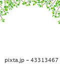 新緑 枝 葉っぱ (PNG、透過) 43313467