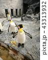 皇帝ペンギンの群れ|コウテイペンギン|水族館 PENGUIN 43313932