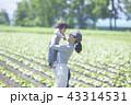 親子 畑 母子の写真 43314531