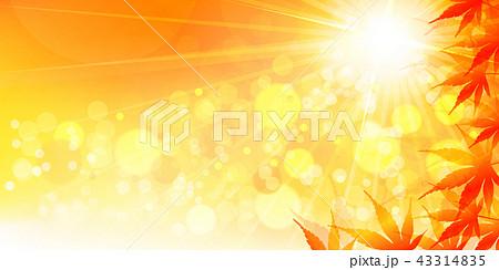 もみじ 太陽 43314835