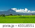 【静岡県】夏空の下、稲と富士山 43318551