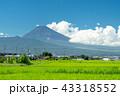 【静岡県】夏空の下、稲と富士山 43318552