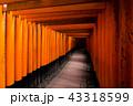 鳥居 伏見稲荷大社 神社の写真 43318599