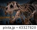 化石 ティラノサウルス 43327820